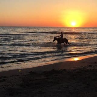 Sunset Horse riding
